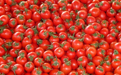 MORE TOMATOES, MORE LOVE